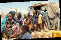 В мире голодают 800 миллионов человек — ООН